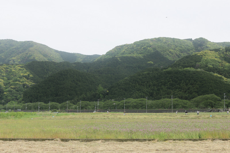 松崎町の田んぼ