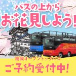 【福岡オープントップバス】3月20日(土)から運行再開します! 桜満開♪ 屋根全開♪ 福岡オープントップバスに乗ってバスの上からお花見しよう!